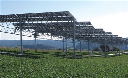 IFC to Strengthen Egypt's Clean Tech Sector, Provide Solar Irrigation to Farmers