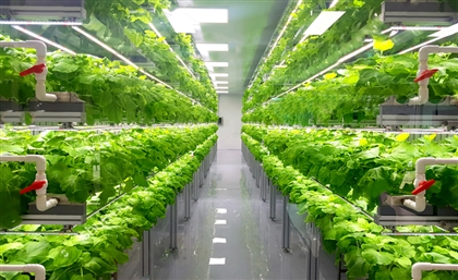 Kuwait Inaugurates Its First Large-Scale Indoor Vertical Farm