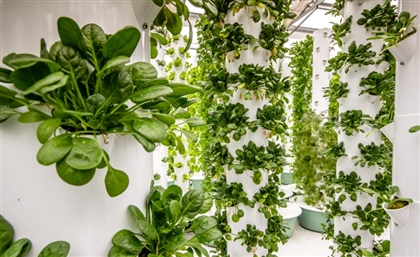 Dubai's KRISPR Secures $600K in Funding to Establish Vertical Farm Pilot Project