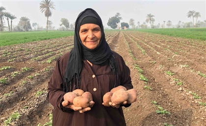 Egypt Directs $486M of Funding to Projects Combating Food Insecurity